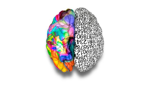 left-right-brain-TS-163982628-628